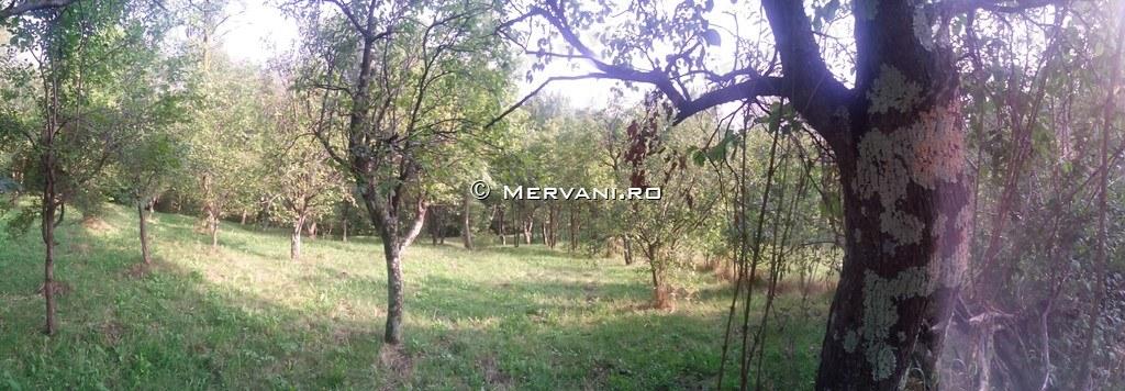 X317E9 – Teren de Vanzare in Cornu, zona Cornu de Sus
